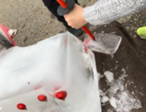 Chasse au trésor dans la glace